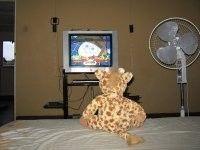 Fotolog de bracito70: Bracito,mirando,tv